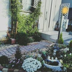 ガーデニング/玄関/ポーチ 玄関前の小さなお庭✨