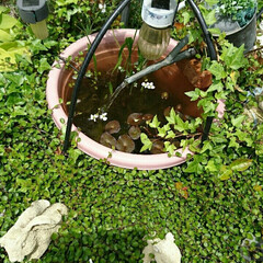 めだか/蓮/ビオトープ/ソーラー噴水/ミニ庭/ナチュラルガーデン/... ソーラー噴水を利用して作ったビオトープ✨…