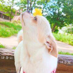 おでかけワンショット/花/きれい/公園/カメラ/ママカメラ/... ↟↟↟  【 鼻 】に【 花…