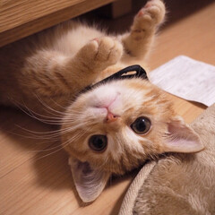 猫/cat/可愛い 圧倒的、猫派です❤︎