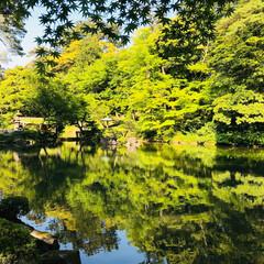 金沢/旅行/兼六園/楽しい/素敵/最高/... 金沢の有名な兼六園にて 水面に映る木々も…
