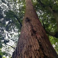 パワースポット/自然/おでかけワンショット/雨季ウキフォト投稿キャンペーン/令和の一枚/はじめてフォト投稿/... 木の匂いがする⭐