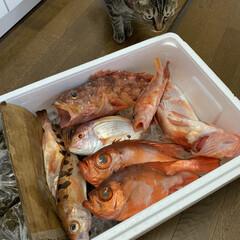 ストウブ鍋 金目鯛の煮付け(2枚目)