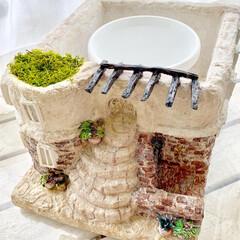 ハンドメイド作家/レンガの家/プロストラーツス/多肉植物/モルタル雑貨/おうち雑貨/... モルタルの鉢カバーを作りました! リゾー…(2枚目)