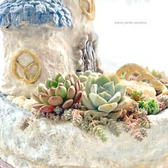 ミンネ/minne/ミンネで販売中/plantsgardenparadise/プランツガーデンパラダイス/白牡丹/... 少し前に作った とんがり屋根のおうち 多…(2枚目)