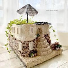 ハンドメイド作家/レンガの家/プロストラーツス/多肉植物/モルタル雑貨/おうち雑貨/... モルタルの鉢カバーを作りました! リゾー…