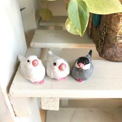 ことりちゃん/小鳥/鳥/白文鳥/桜文鳥/樹脂粘土/... 白文鳥と桜文鳥 作ってみました🦉💕 文鳥…