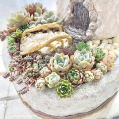 ミンネ/minne/ミンネで販売中/plantsgardenparadise/プランツガーデンパラダイス/白牡丹/... 少し前に作った とんがり屋根のおうち 多…(4枚目)