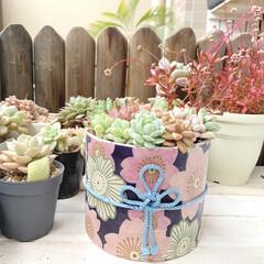 DIY/多肉植物の寄せ植え/多肉植物/総角結び/デコパージュ/桜柄/... 多肉植物 春の寄せ植えを作成 鉢は、和柄…