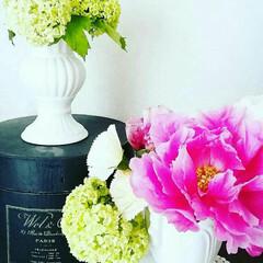 おすすめアイテム/LIMIAインテリア部/雑貨/暮らし/100均/ダイソー/... 写真の2つの花瓶は、なんとダイソーの商品…(1枚目)