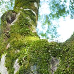苔/緑が好き/とらや工房/はじめてフォト投稿 とらや工房さんのお庭にて。 大好きな苔💕