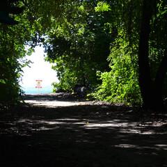 Australia/グリーン島/グレートバリアリーフ/オーストラリア/ケアンズ/海/... グレートバリアリーフに浮かぶグリーン島で…