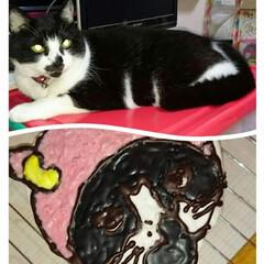 猫派 毎年娘に作り続けてる『今年のキャラケーキ…