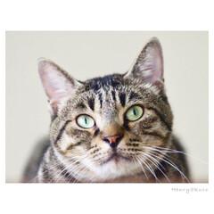 猫/猫派/フォロー大歓迎/LIMIAファンクラブ/LIMIAペット同好会/にゃんこ同好会 えーっと…  by ヘンリー