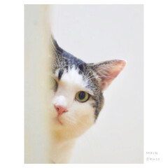 ひょっこりにゃん/猫派/フォロー大歓迎/LIMIAファンクラブ/LIMIAペット同好会/にゃんこ同好会/... 真顔で ひょっこりにゃん by マーク
