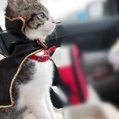 猫/キャット/イケメン/うちの子ベストショット お主キマってるぞ!