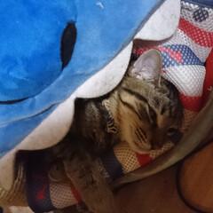 猫あるある 結局ベッドからはみ出して寝る😴