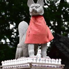 おでかけワンショット/神社/神々しい/神の使い 馬橋稲荷神社 神の使い