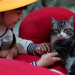 猫と暮らす/ただいま/マンチカン/マンチカン好き/うちの子ベストショット ただいま☆