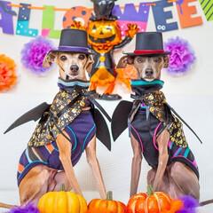 ハロウィン/ハッピーハロウィン/halloween/HAPPYHALLOWEEN/ハロウィン犬/ハロウィン2019 🎃Happy Halloween👻 Tr…