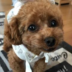 うちの子ベストショット お気に入りのうさ耳のお洋服です(^O^)