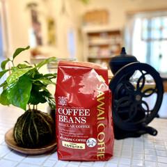 コーヒーの木/コケ玉/苔玉/キッチン/観葉植物 珈琲大好き人間です。ホームセンターでコー…(2枚目)