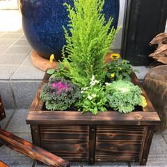 リミアな暮らし 季節の草花の寄せ植え正月バージョンで、葉…