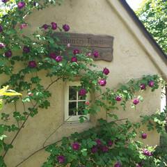 小屋/タイニーハウス/住まい/暮らし/かわいい家/デザイン住宅/... カントリータウンのタイニーハウス バラが…