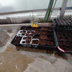 家庭菜園/DIY/住まい/暮らし 今日はほとんど家に籠ってました。まぁそな…(2枚目)