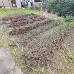家庭菜園/DIY/住まい/暮らし 今日はほとんど家に籠ってました。まぁそな…(1枚目)