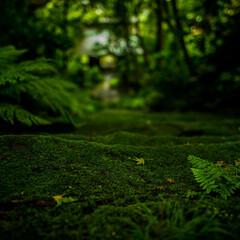 おでかけワンショット 手前のシダと落ち葉の雰囲気がとても好きで…