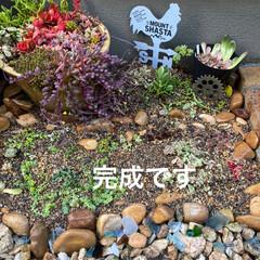 シーグラス/多肉植物/多肉植物寄せ植え/花壇作り/花壇DIY 今日は 小さな花壇作り! 先ずは ser…(7枚目)