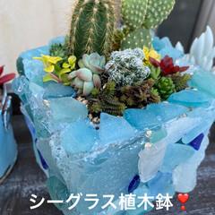 ガーデン/シーグラス/リメイク鉢/植木鉢/サボテン/多肉/... シーグラス使って 多肉ちゃんの鉢完成🌟 …