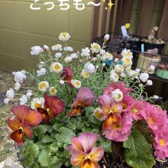 花壇/猫/リメ鉢/リメイク鉢 もうすぐ到着のリエール苗のため 塗りまく…(6枚目)