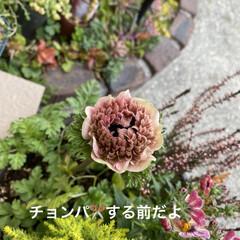 花/ドライフラワー 色んな花をドライフラワーにしてみたい今日…(3枚目)