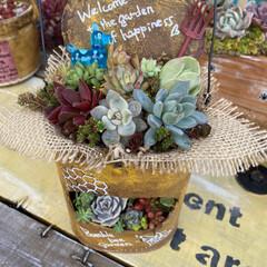 多肉植物/多肉/多肉植物の寄せ植え/リメ缶/リメ缶バッグ 蘭くんのおうちさんが 作ってた バスロマ…(2枚目)