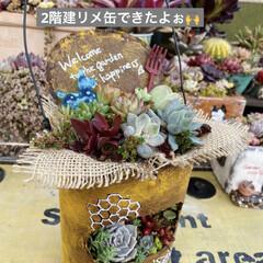 多肉植物/多肉/多肉植物の寄せ植え/リメ缶/リメ缶バッグ 蘭くんのおうちさんが 作ってた バスロマ…(1枚目)