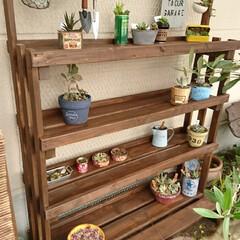 DIY/ダイソー/セリア/キャンドゥ/多肉植物のある暮らし/植物 棚 こちらに沢山投稿されているものを参考にし…