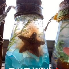 シーグラス/海/シーグラス雑貨 昨日投稿した 保冷剤inシーグラス  昨…