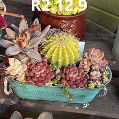 パンジー/花壇/多肉植物の寄せ植え/多肉/多肉植物 昨日植えた パンジー💕  花壇の中に少し…(3枚目)