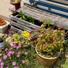 ガーデン/多肉植物/水草/ビオトープ/メダカ 暑くなってきましたねぇ💦💦  うちのメダ…