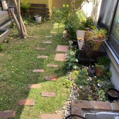 多肉植物/多肉/ガーデン/庭/寄せ植え/多肉植物寄せ植え/... いつまで酷暑日は続くのでしょう💦💦💦  …