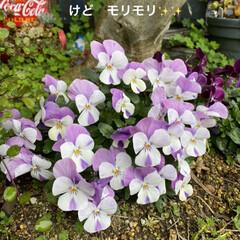 花壇/猫/リメ鉢/リメイク鉢 もうすぐ到着のリエール苗のため 塗りまく…(5枚目)