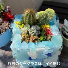 多肉/多肉植物/ダイソー/100均/竹細工/リメイク鉢 今日は息子ちゃんの卒業式でした🌸  なの…(8枚目)
