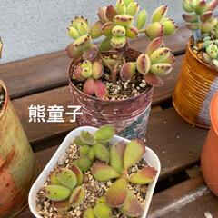 サボテン寄せ植え/サボテン/多肉植物寄せ植え/多肉/多肉植物 少し前に シーグラス鉢に 100均サボテ…(3枚目)