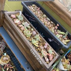 花壇/猫/リメ鉢/リメイク鉢 もうすぐ到着のリエール苗のため 塗りまく…(4枚目)