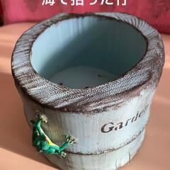 多肉/多肉植物/ダイソー/100均/竹細工/リメイク鉢 今日は息子ちゃんの卒業式でした🌸  なの…(5枚目)