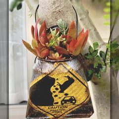 リメ缶バッグ/リメ鉢/リメ缶/多肉植物寄せ植え/多肉/多肉植物 リメ缶バッグ やっと完成🙌  作りかけで…(2枚目)