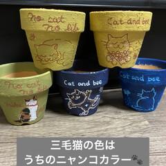 花壇/猫/リメ鉢/リメイク鉢 もうすぐ到着のリエール苗のため 塗りまく…(2枚目)