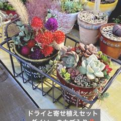 リメ鉢/リメイク鉢/多肉植物寄せ植え/多肉/ダイソー/多肉植物 第三弾❗️お世話になってる美容室の鉢で作…(1枚目)
